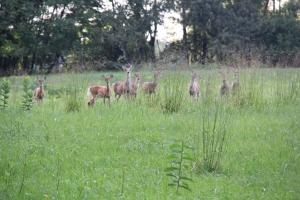 Herd of deer - Stafford Trail
