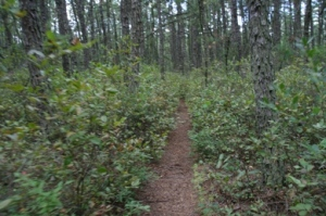 Typical Batona Trail.