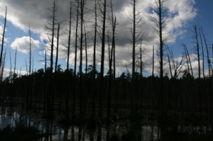 Swamps.
