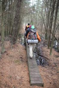 Crossing a swamp on boardwalks.