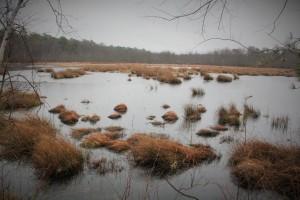 Nice, big bog on this side.