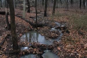 Stream by pond.