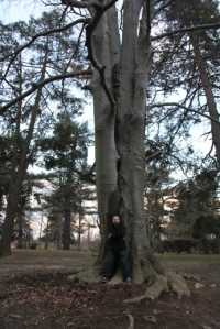 Pat found an old tree.