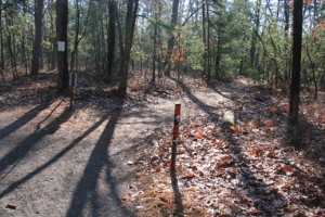 Split between the Cranberry Trail and the Cranberry Loop Trail.