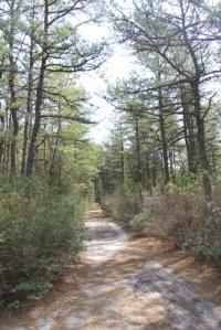 Batona Trail.