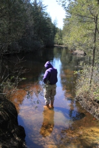 Wading at lunch.