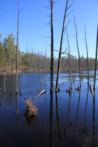 Swamp view shortly after Batona Campground.