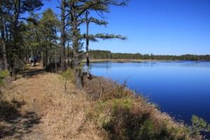 Another beautiful bog walk.
