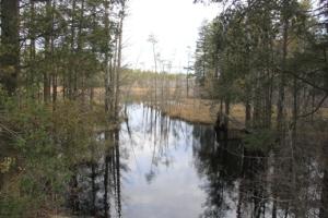 Bog next to the pond.