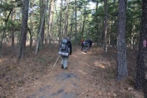 Walking along the Batona/Cranberry Trails.