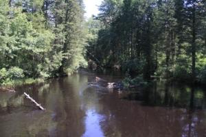Oswego River at Martha Bridge.
