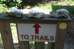 Skulls = always a great start for a trail.