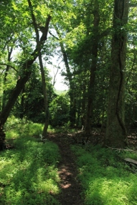 Blue trail.