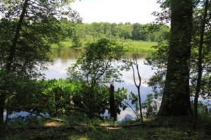 Rancocas Creek (again)