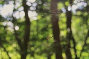 Also, we saw a spider.