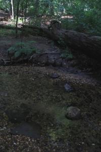 Hop across using these rocks... no problem!