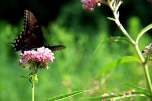 Meadows = butterflies.