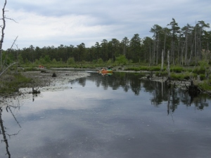 Big, beautiful swamps.  Way different than anything on the Wading.