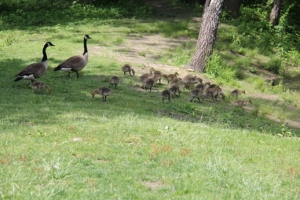 Wildlife at Kirby's Mill, (different day).