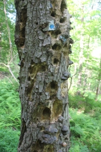 Stick with the blue blazes on the way up, and watch out for this crazy tree.