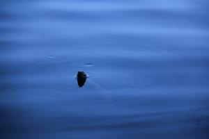 Water snake says hi.
