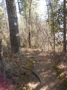 Trail has gotten a lot more fun!