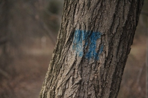 Marks on trees.