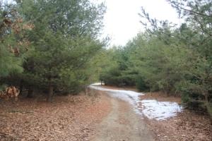 Yellow Trail.