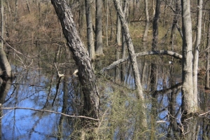 Nice swamp.