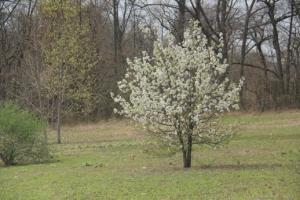 I love Spring.
