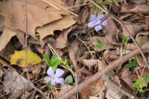 I love Spring. Keep an eye out for the little things along the trail.