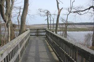 End of the line - the boardwalk.