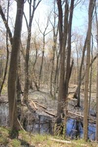 Fun swamps.