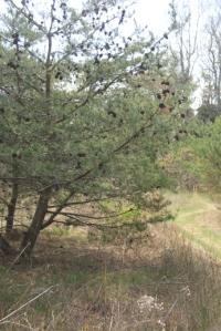 Tree in the field.