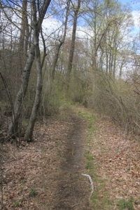 Trail gets much more narrow once your on the island.