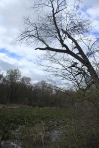 Swamp trees are photogenic.