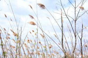 Reeds along the way.