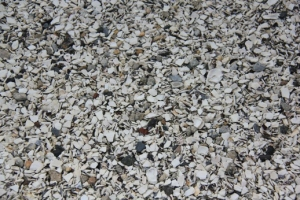 The parking lots are even made of shells.