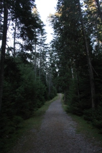 Easy walking on the old logging road.
