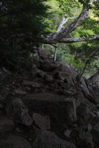 This was the most dangerous part of the trail (if you are decently tall like me).