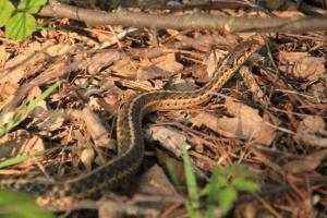 I met a snake.