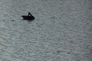 The Pres enjoyed the geese, which he gleefully pointed out to us.