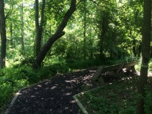 Short side trail to a nice spot to sit.