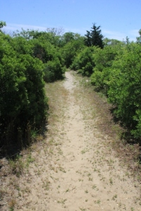 Trail is smaller.