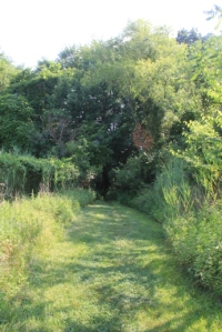 The trail will narrow down and go into the trees through a gap in the fence.