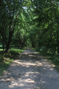 Shady lane (s feel good on hot summer days)