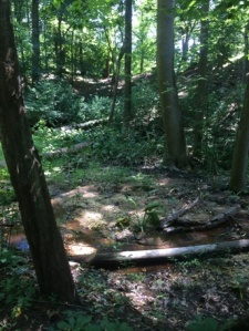 Woods.