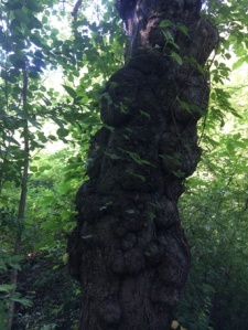 Awesome knobby tree.
