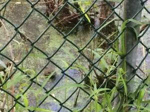 Let my amphibians go.