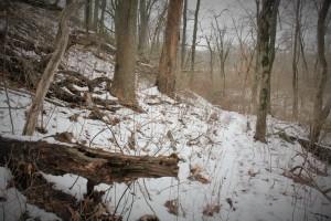 Nice, snowy walk.